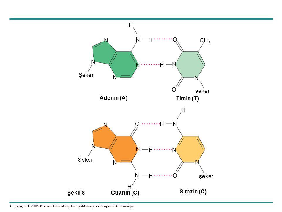 N H O CH3 şeker Şeker Adenin (A) Timin (T) Guanin (G) Sitozin (C) Şekil 8