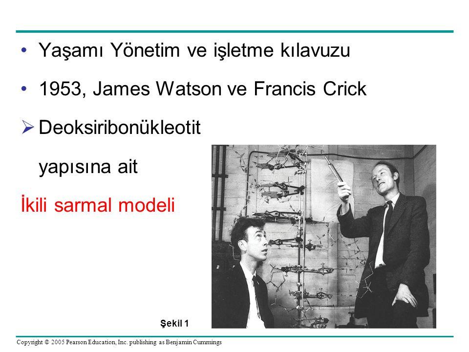 Yaşamı Yönetim ve işletme kılavuzu 1953, James Watson ve Francis Crick