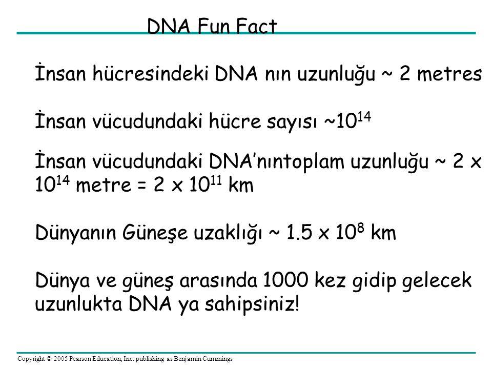 DNA Fun Fact İnsan hücresindeki DNA nın uzunluğu ~ 2 metres. İnsan vücudundaki hücre sayısı ~1014.