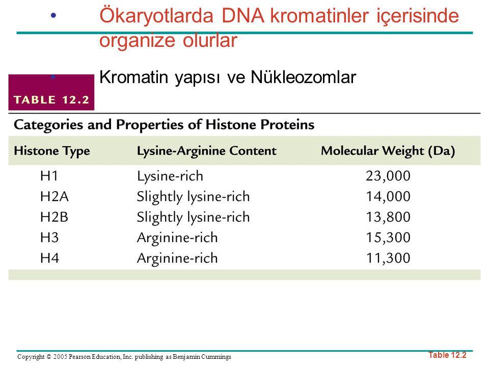 Ökaryotlarda DNA kromatinler içerisinde organize olurlar