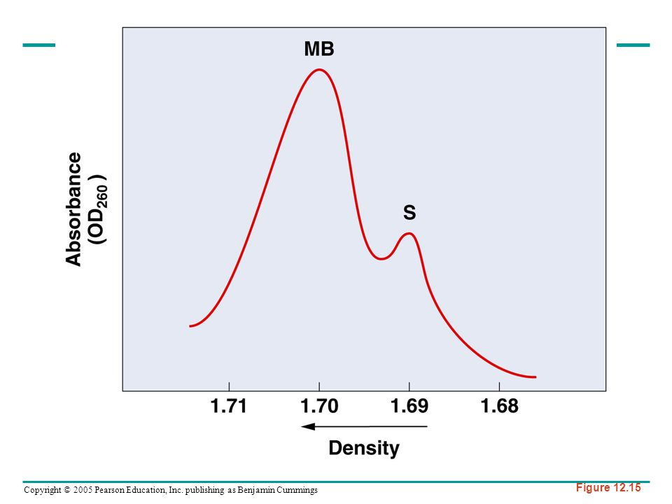 Figure 12-15 Separation of main-band (MB) and satellite (S) DNA from the mouse by using ultracentrifugation in a CsCl gradient.