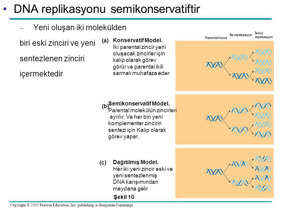 DNA replikasyonu semikonservatiftir