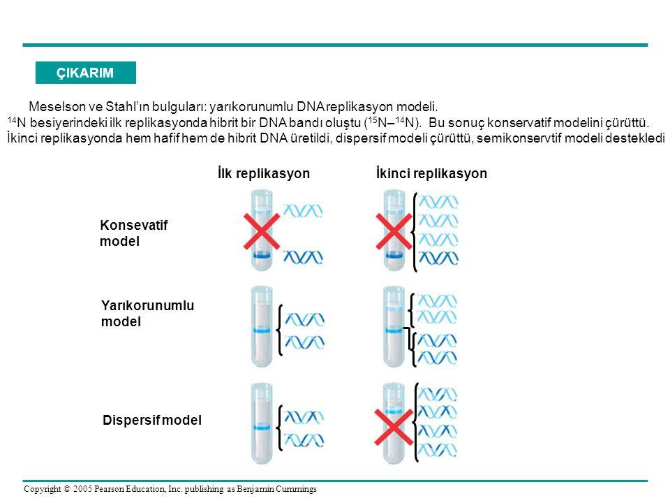 ÇIKARIM Meselson ve Stahl'ın bulguları: yarıkorunumlu DNA replikasyon modeli.