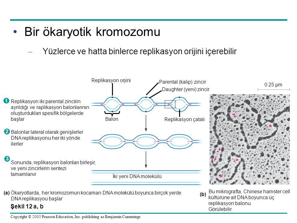 Bir ökaryotik kromozomu