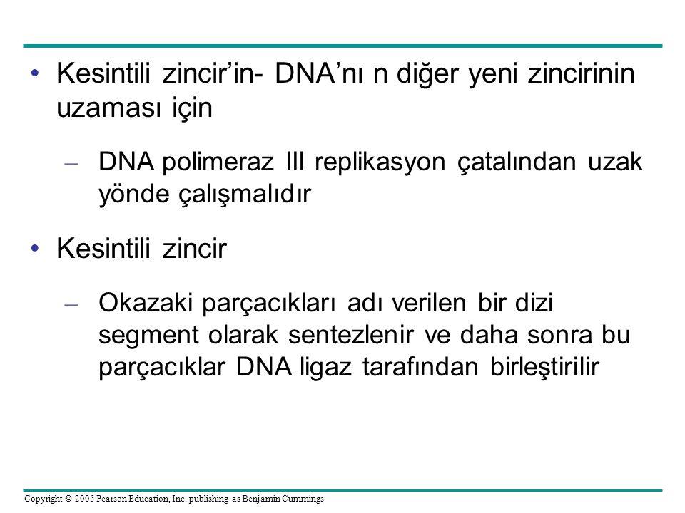 Kesintili zincir'in- DNA'nı n diğer yeni zincirinin uzaması için