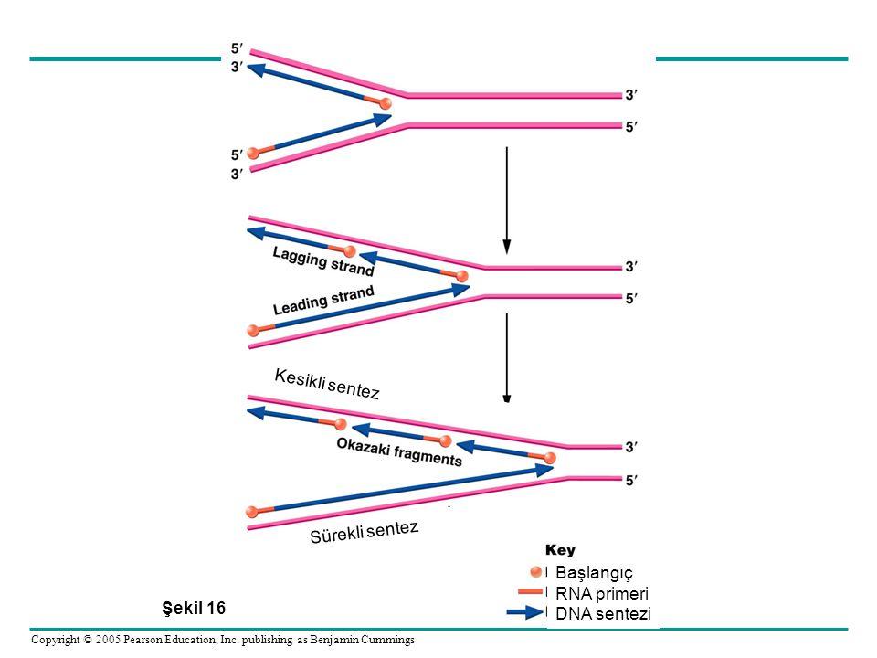 Kesikli sentez Sürekli sentez Başlangıç RNA primeri DNA sentezi