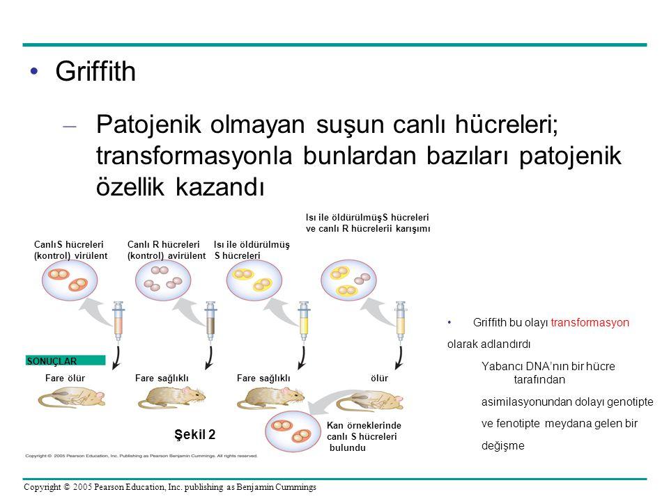 Griffith Patojenik olmayan suşun canlı hücreleri; transformasyonla bunlardan bazıları patojenik özellik kazandı.