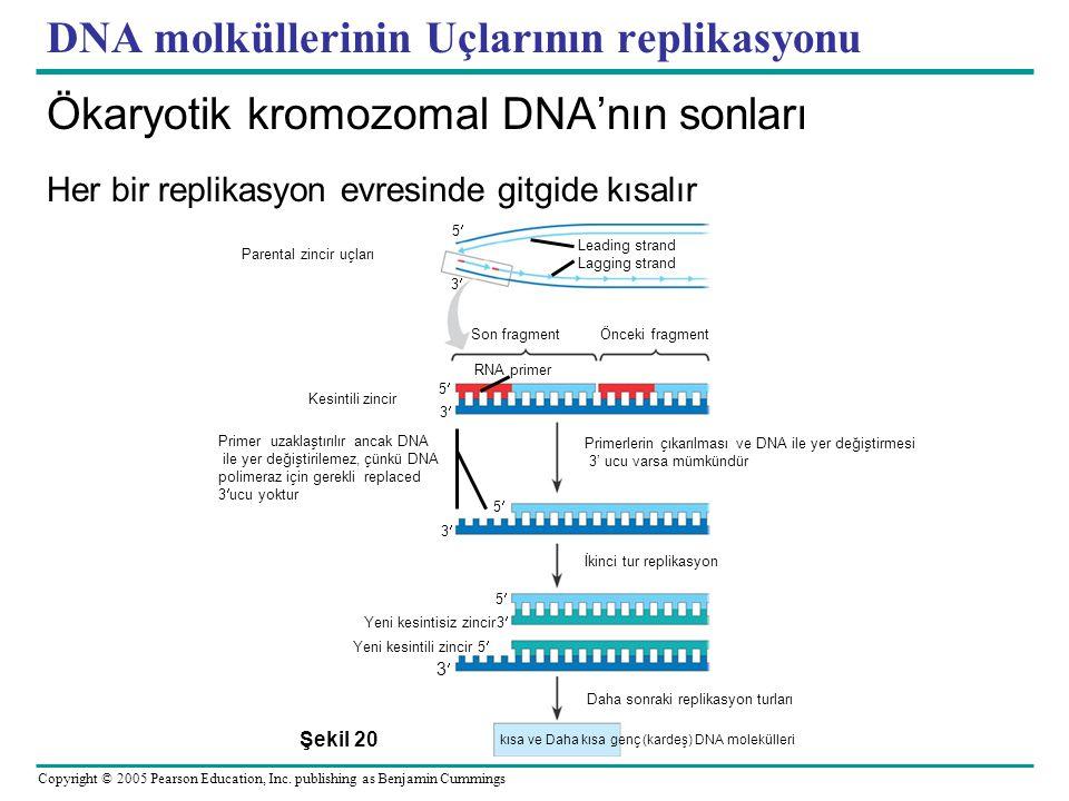 DNA molküllerinin Uçlarının replikasyonu