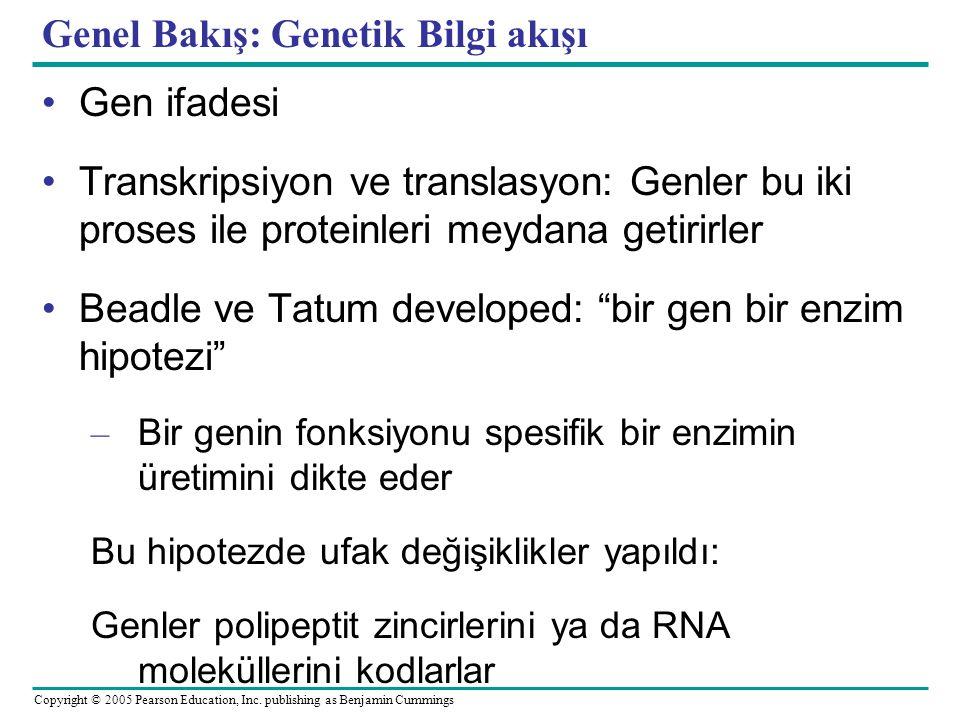 Genel Bakış: Genetik Bilgi akışı