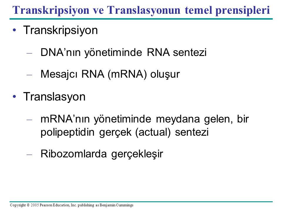 Transkripsiyon ve Translasyonun temel prensipleri