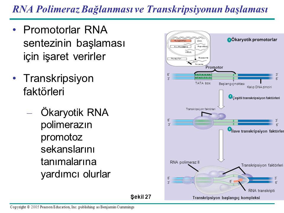 RNA Polimeraz Bağlanması ve Transkripsiyonun başlaması