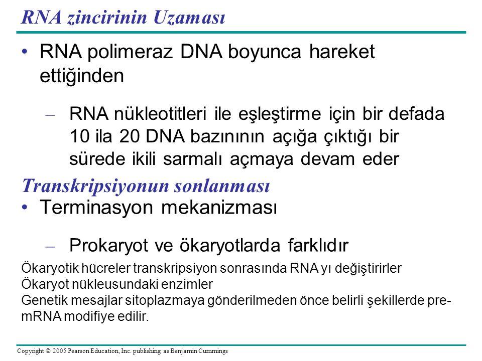 RNA zincirinin Uzaması