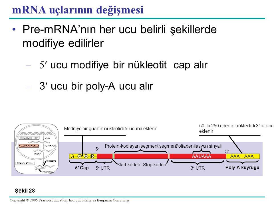 mRNA uçlarının değişmesi
