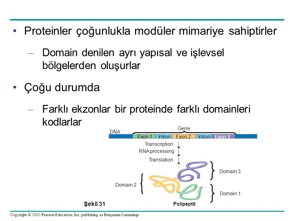 Proteinler çoğunlukla modüler mimariye sahiptirler