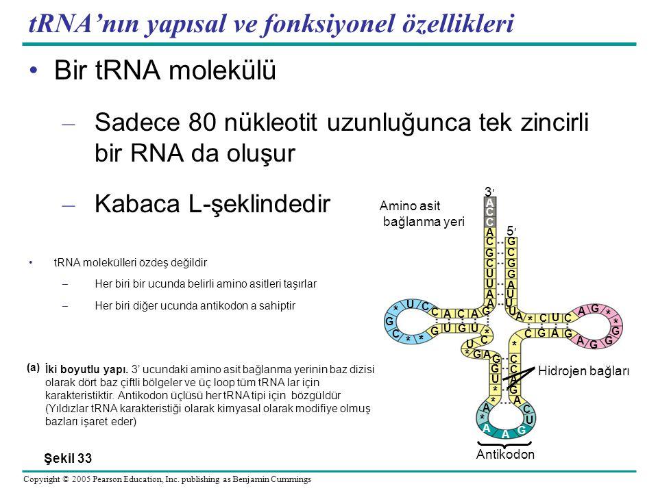 tRNA'nın yapısal ve fonksiyonel özellikleri
