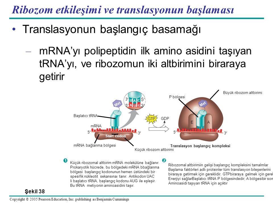 Ribozom etkileşimi ve translasyonun başlaması