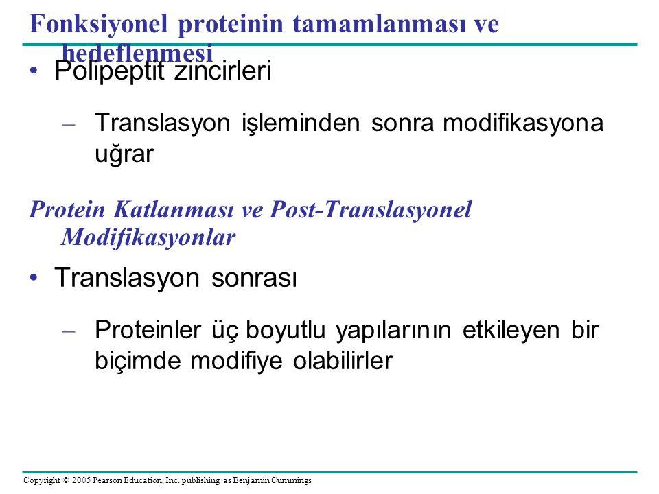 Fonksiyonel proteinin tamamlanması ve hedeflenmesi