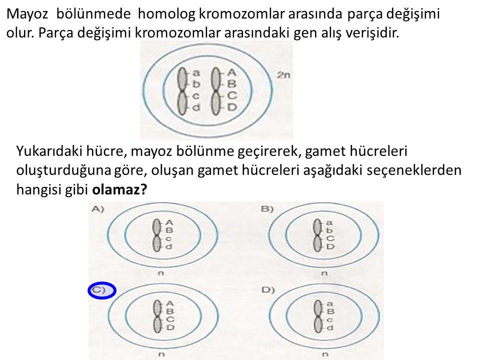 Mayoz bölünmede homolog kromozomlar arasında parça değişimi olur