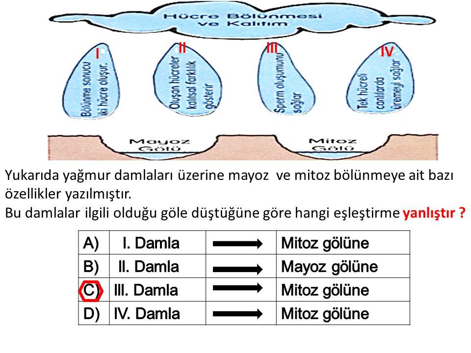ll lll. l. lV. Yukarıda yağmur damlaları üzerine mayoz ve mitoz bölünmeye ait bazı özellikler yazılmıştır.