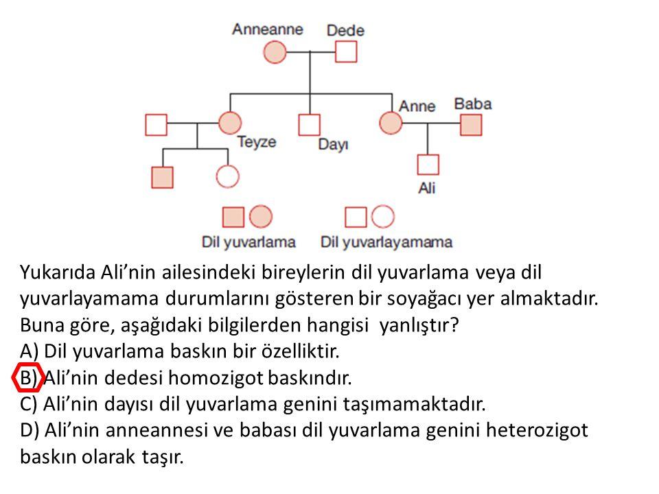 Yukarıda Ali'nin ailesindeki bireylerin dil yuvarlama veya dil yuvarlayamama durumlarını gösteren bir soyağacı yer almaktadır.