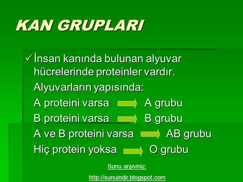 KAN GRUPLARI İnsan kanında bulunan alyuvar hücrelerinde proteinler vardır. Alyuvarların yapısında: