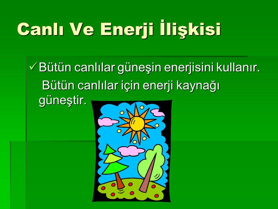 Canlı Ve Enerji İlişkisi