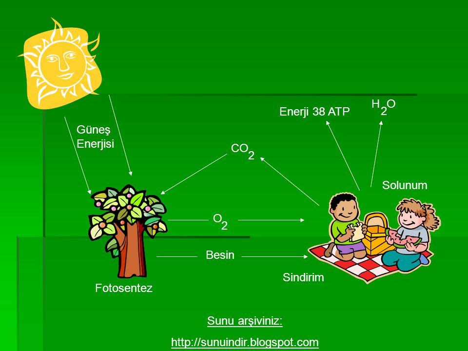 H O Enerji 38 ATP. 2. Güneş Enerjisi. CO. 2. Solunum. O. 2. Besin. Sindirim. Fotosentez.