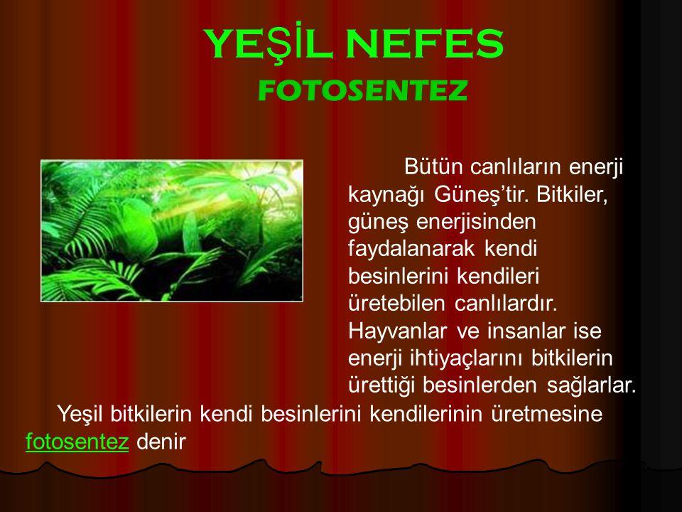 YEŞİL NEFES FOTOSENTEZ