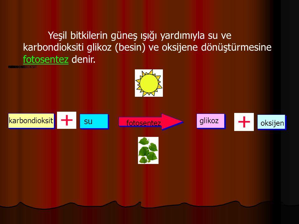Yeşil bitkilerin güneş ışığı yardımıyla su ve karbondioksiti glikoz (besin) ve oksijene dönüştürmesine fotosentez denir.