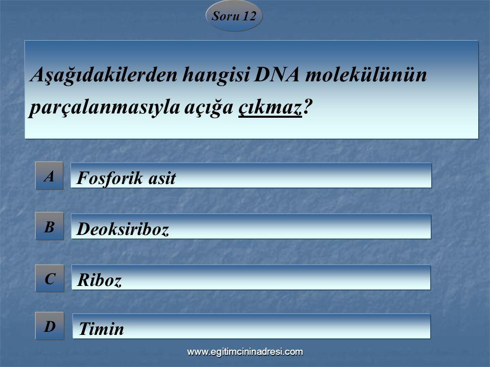 Aşağıdakilerden hangisi DNA molekülünün parçalanmasıyla açığa çıkmaz
