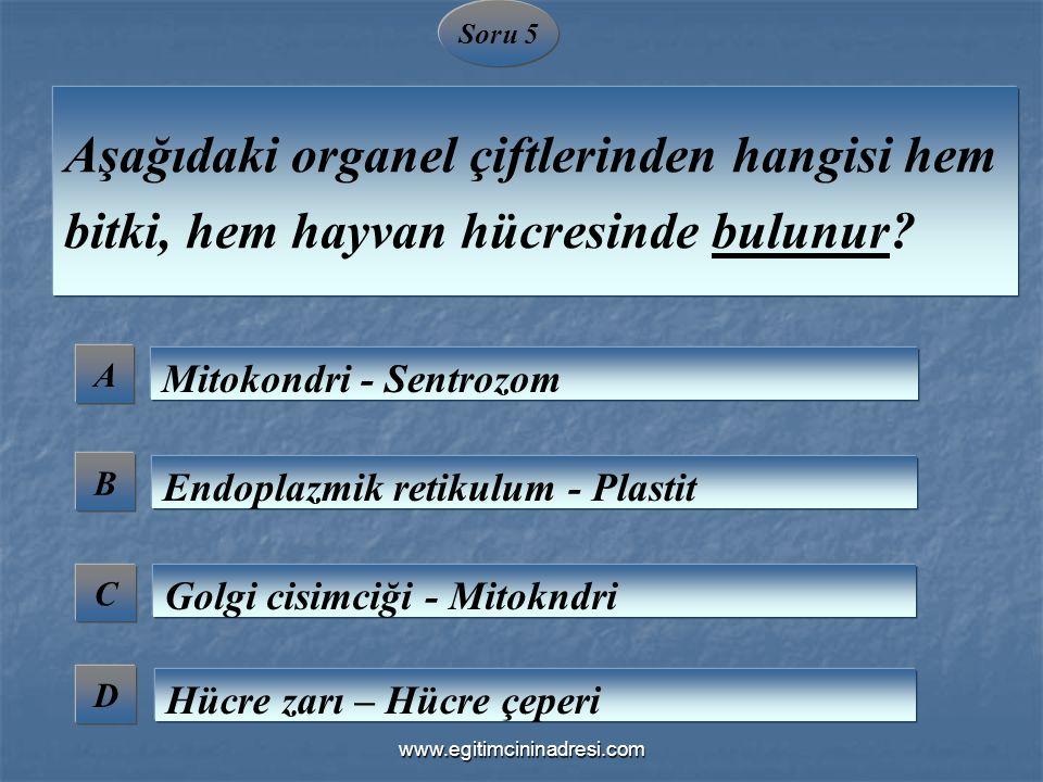 Soru 5 Aşağıdaki organel çiftlerinden hangisi hem bitki, hem hayvan hücresinde bulunur A. Mitokondri - Sentrozom.