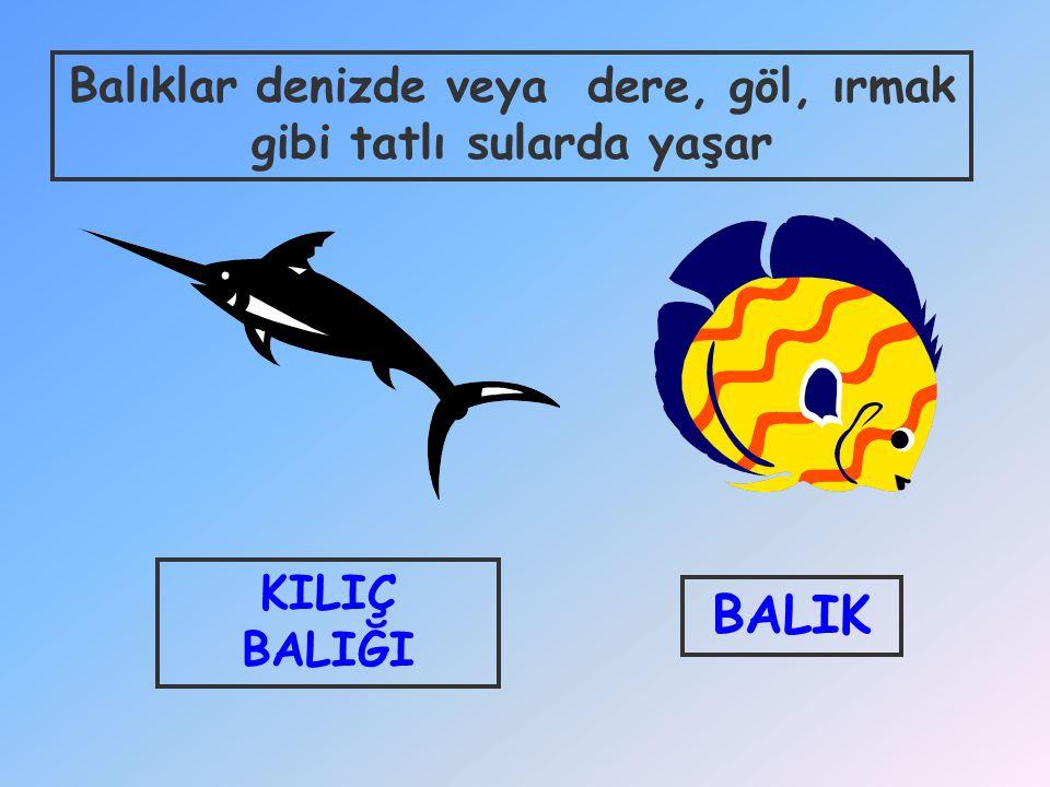 Balıklar denizde veya dere, göl, ırmak gibi tatlı sularda yaşar