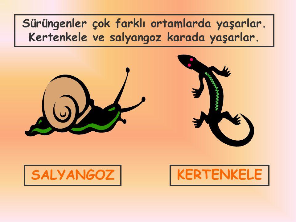 Sürüngenler çok farklı ortamlarda yaşarlar