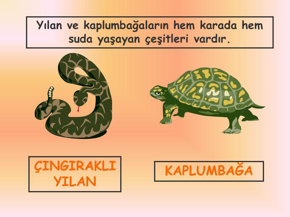 Yılan ve kaplumbağaların hem karada hem suda yaşayan çeşitleri vardır.