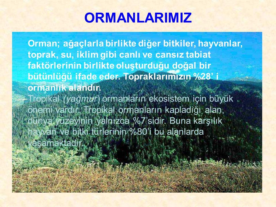 ORMANLARIMIZ