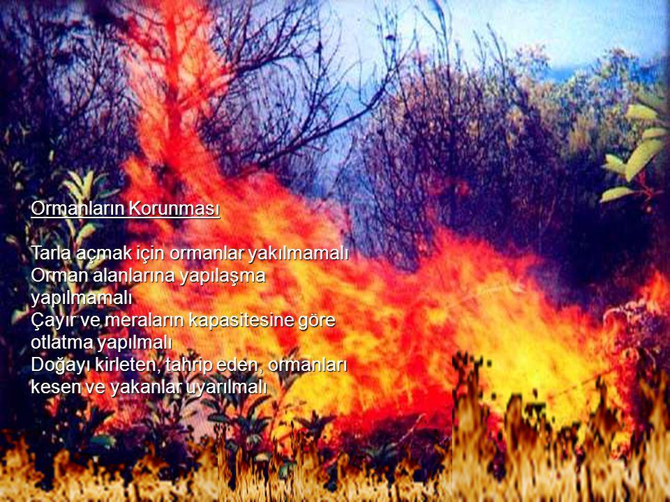 Ormanların Korunması Tarla açmak için ormanlar yakılmamalı. Orman alanlarına yapılaşma yapılmamalı.