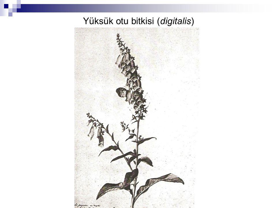 Yüksük otu bitkisi (digitalis)
