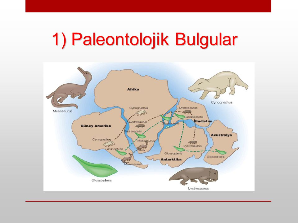 1) Paleontolojik Bulgular