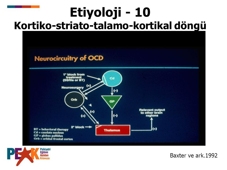 Etiyoloji - 10 Kortiko-striato-talamo-kortikal döngü