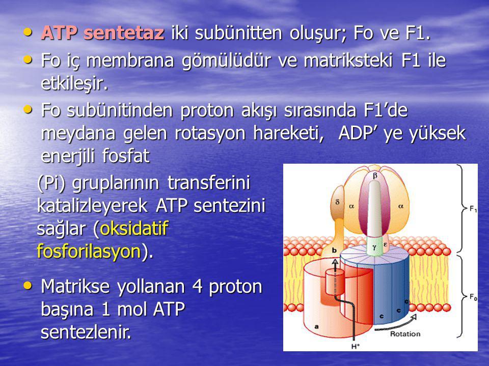 ATP sentetaz iki subünitten oluşur; Fo ve F1.