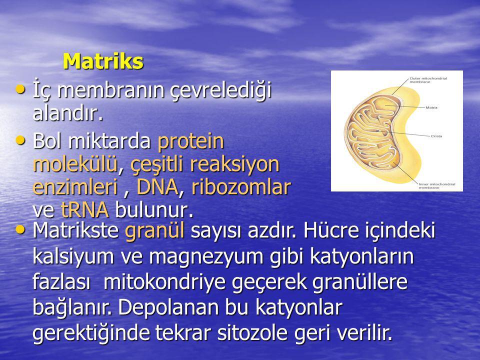 Matriks İç membranın çevrelediği alandır. Bol miktarda protein molekülü, çeşitli reaksiyon enzimleri , DNA, ribozomlar ve tRNA bulunur.