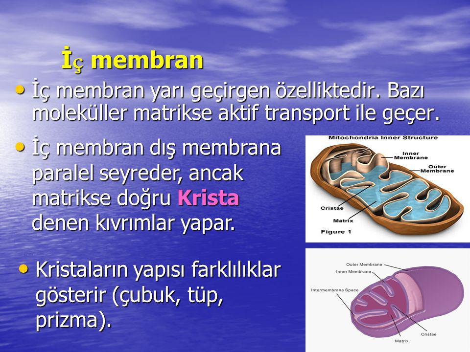 İç membran İç membran yarı geçirgen özelliktedir. Bazı moleküller matrikse aktif transport ile geçer.