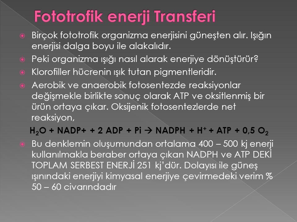 Fototrofik enerji Transferi
