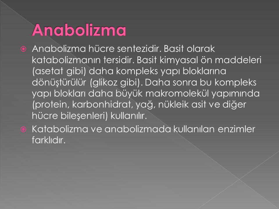 Anabolizma
