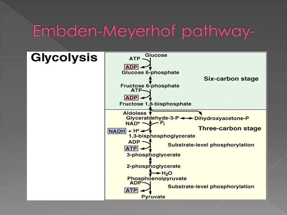 Embden-Meyerhof pathway-