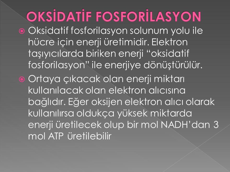 OKSİDATİF FOSFORİLASYON