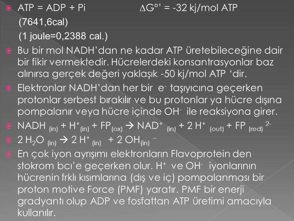 ATP = ADP + Pi ∆G°' = -32 kj/mol ATP