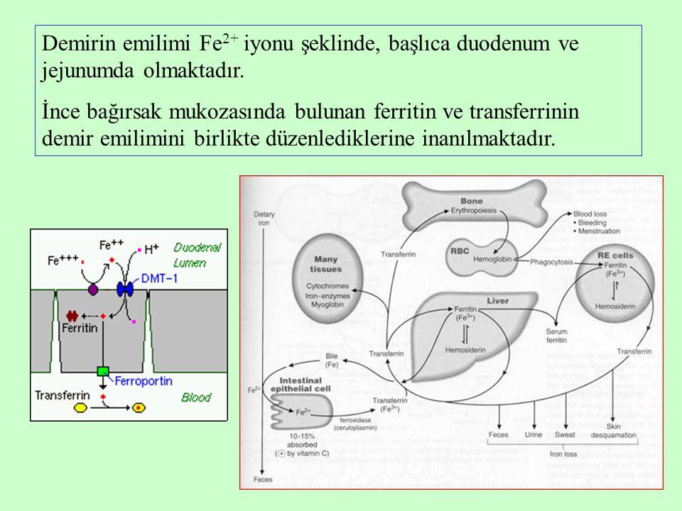 Demirin emilimi Fe2+ iyonu şeklinde, başlıca duodenum ve jejunumda olmaktadır.