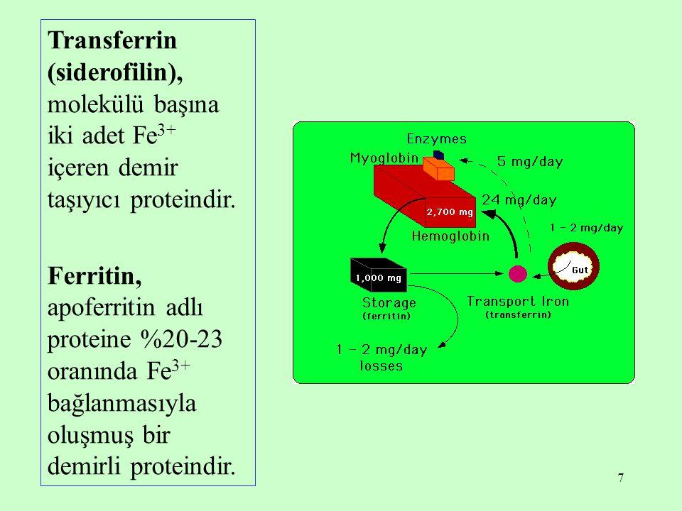 Transferrin (siderofilin), molekülü başına iki adet Fe3+ içeren demir taşıyıcı proteindir.