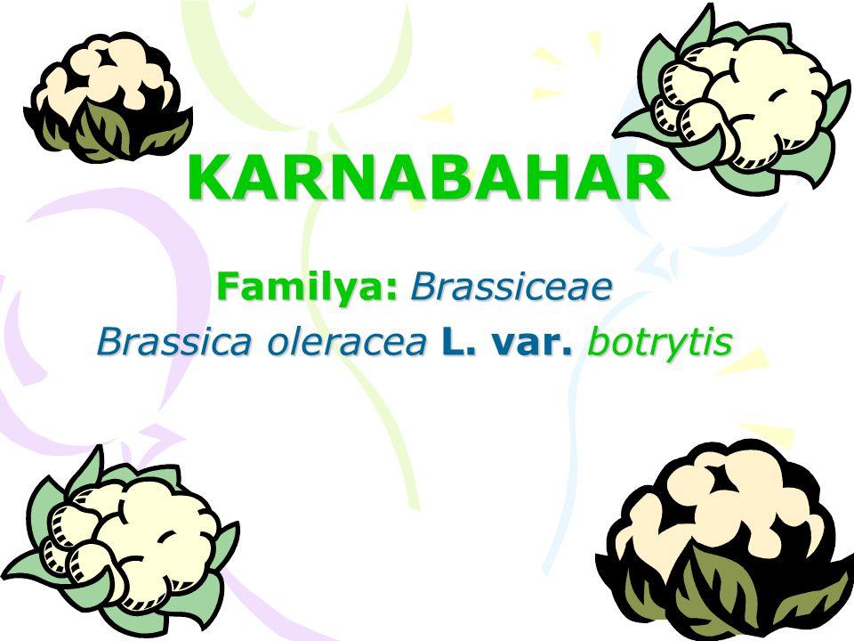 Familya: Brassiceae Brassica oleracea L. var. botrytis
